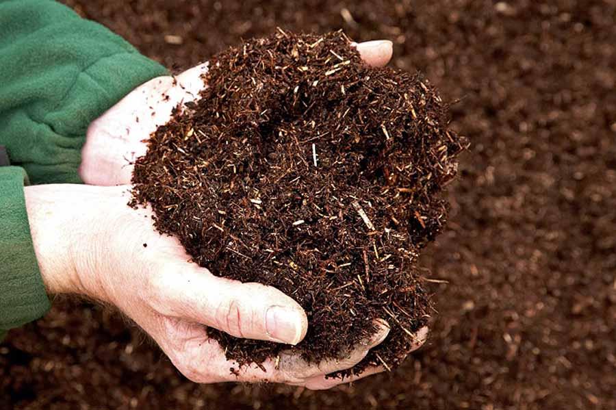 Chọn đất trồng cây Tribat của Quang Anh HCM giúp cây của bạn được phát triển tốt nhất.