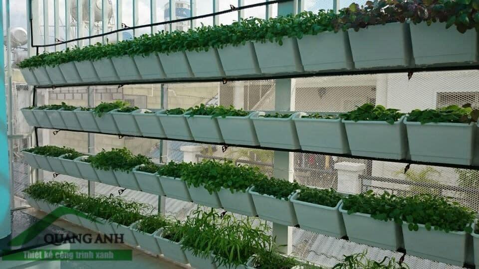 Quang Anh HCM thi công giàn trồng rau ốp tường giá rẻ, chuyên nghiệp