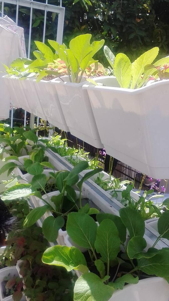 kệ trồng rau tphcm Quang Anh
