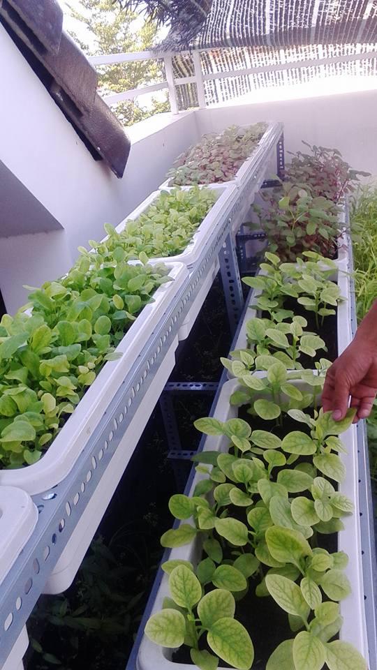 Bán kệ trồng rau tphcm