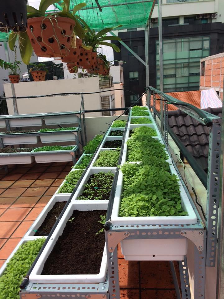 ưu điểm của mô hình trồng rau sạch tại nhà