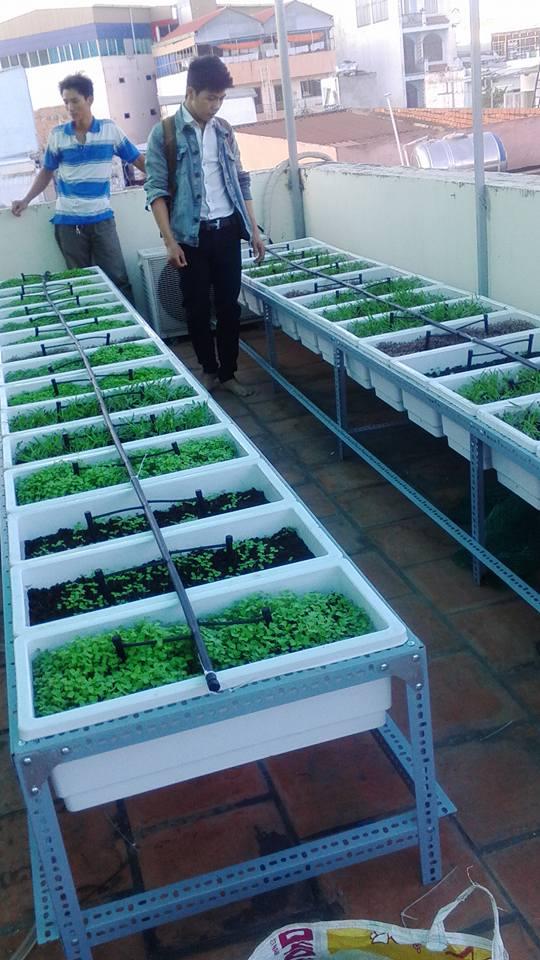 Mua kệ trồng rau tại tphcm