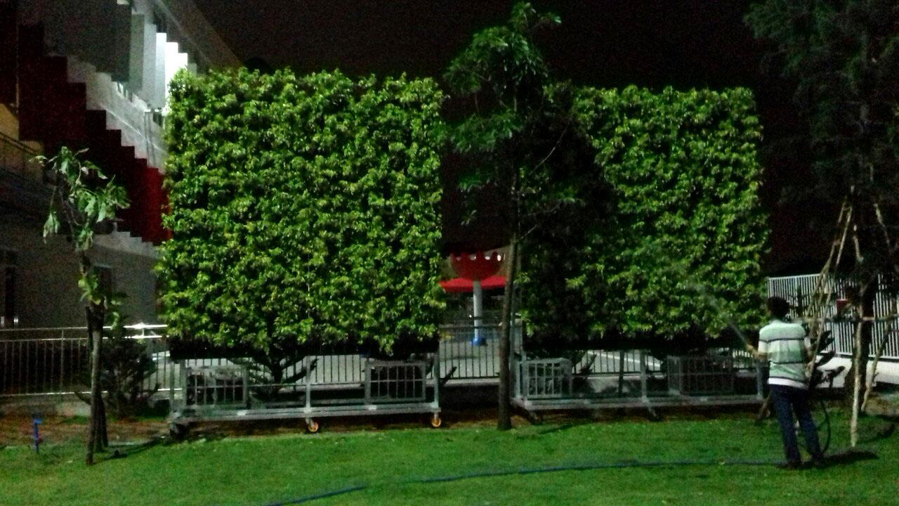 vườn tường cây xanh hcm