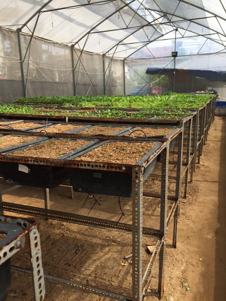 mua kệ trồng rau tphcm