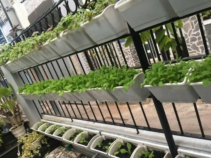 thiết kế vườn rau sạch tại nhà