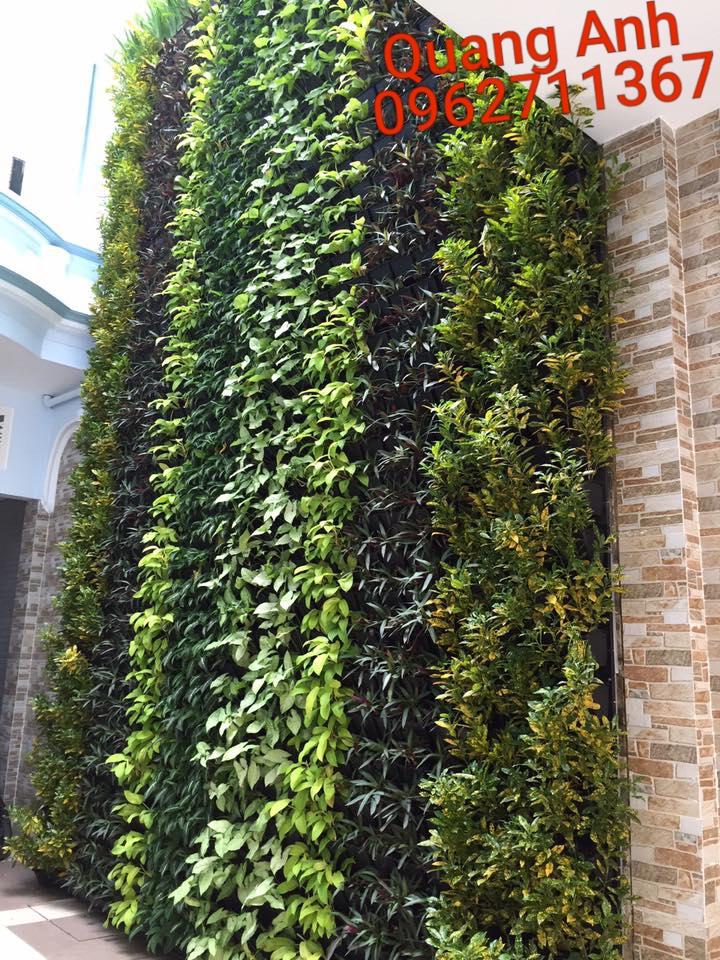thiết kế vườn tường cây xanh đẹp