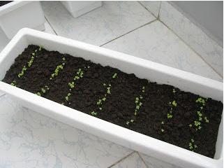 chậu nhựa trồng rau thông minh tại nhà tphcm