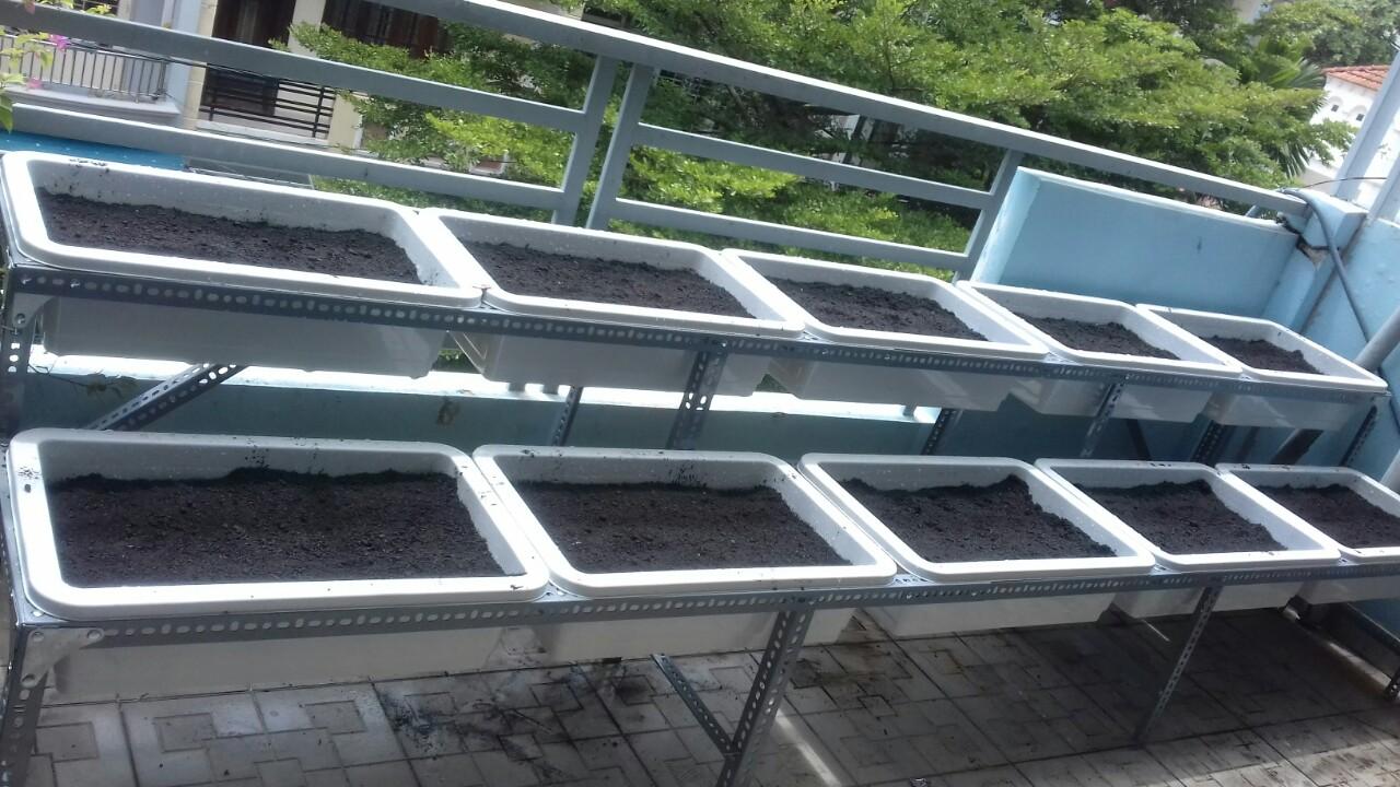 thiết kế vườn rau sạch hcm