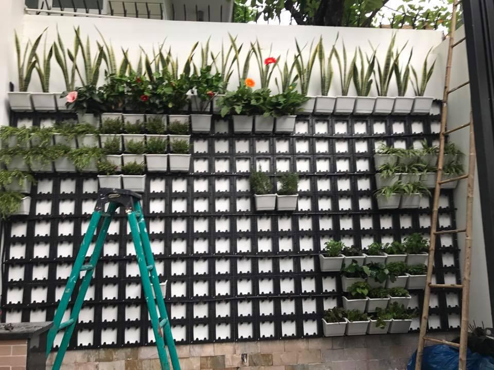 thiết kế vườn tường cây xanh