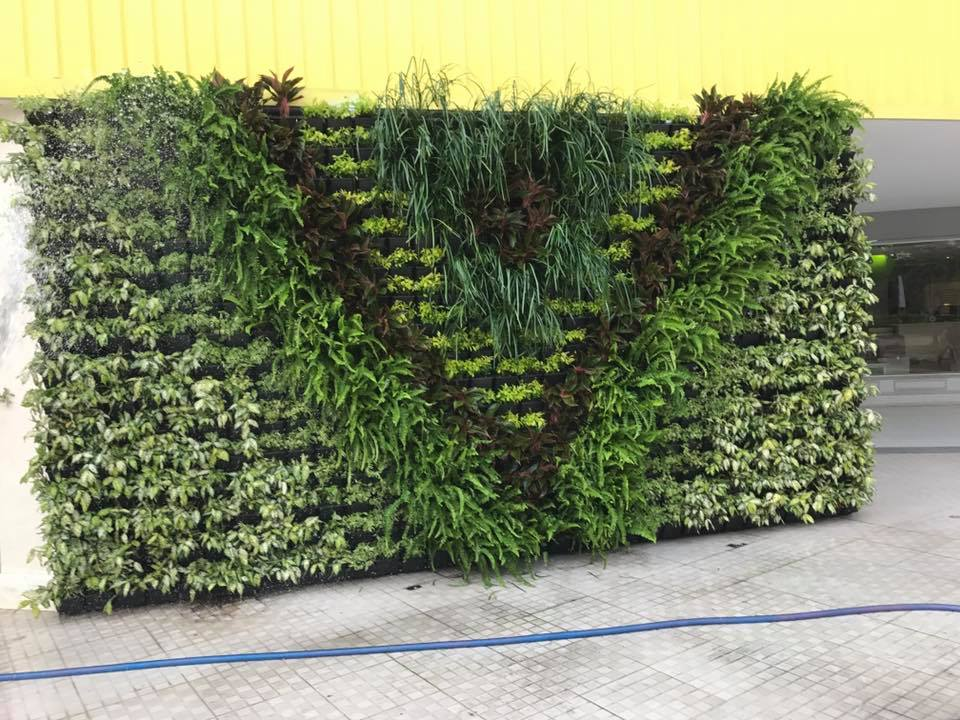 thiế kế tường cây xanh