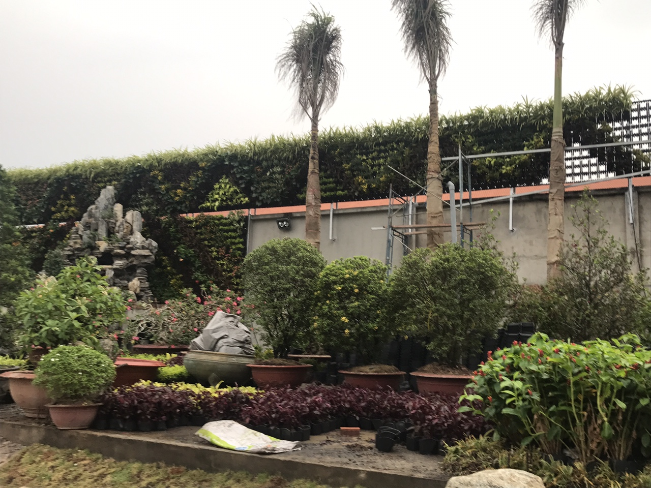 vườn tường Bình Chánh
