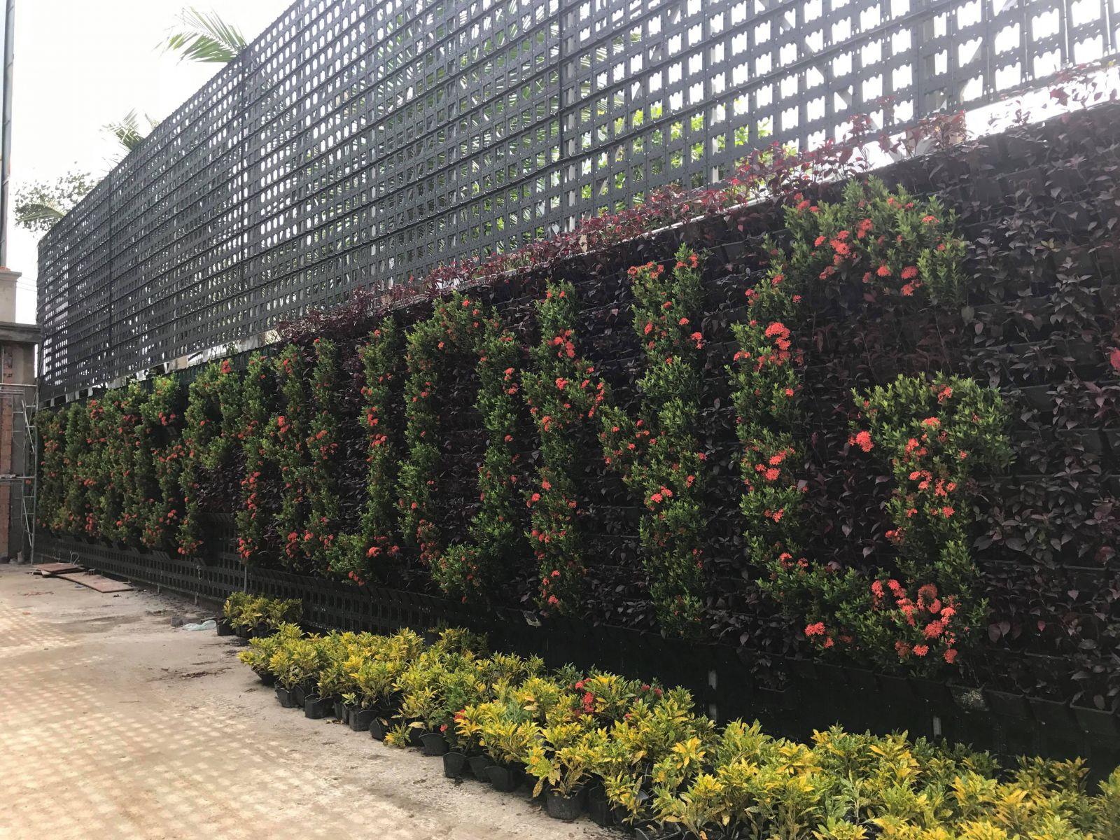 thiết kế vườn tường cây xanh độc đáo