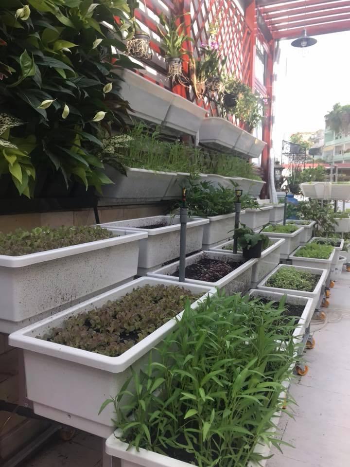 thiết kế vườn rau tại nhà