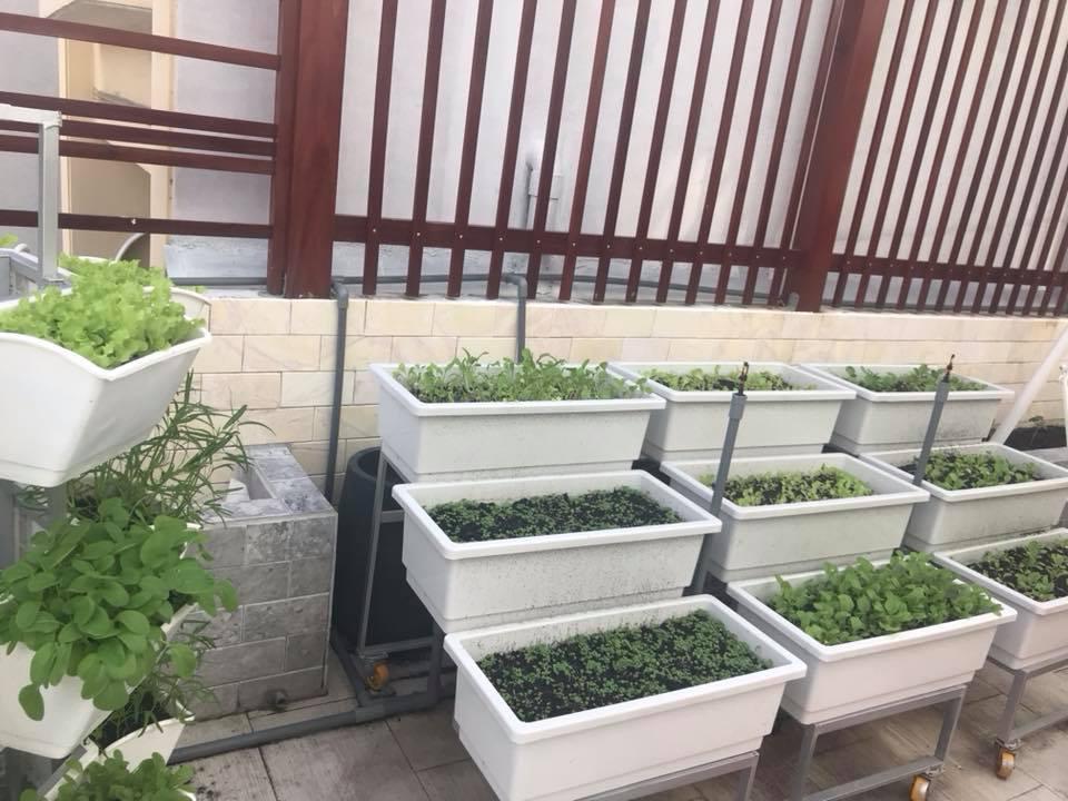 ưu điểm vượt trội của mô hình trồng rau sạch tại nhà