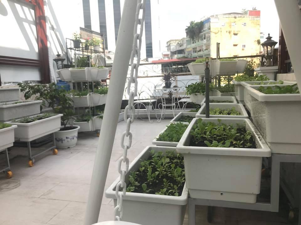 thiết kế vườn rau sạch tại nhà tphcm