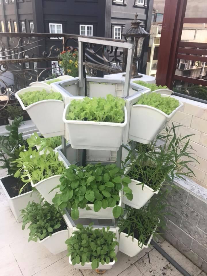 vườn rau sạch giàn trồng rau