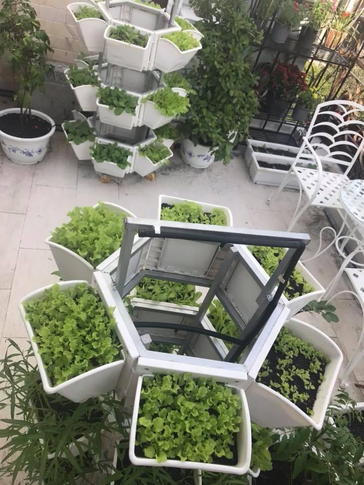 thiết vườn rau tại nhà quận 1