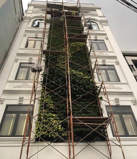 Quang Anh HCM chuyên thiết kế thi công vườn tường đứng cây xanh chuyên nghiệp, giá rẻ