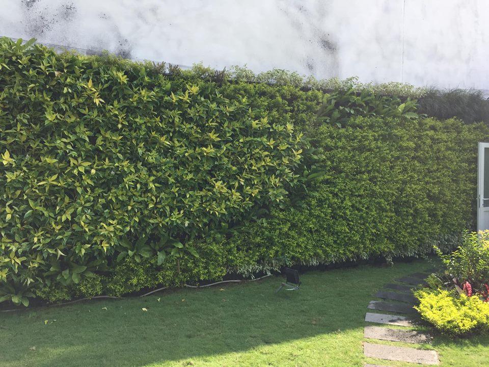 Ưu điểm của thiết kế vườn tường đứng