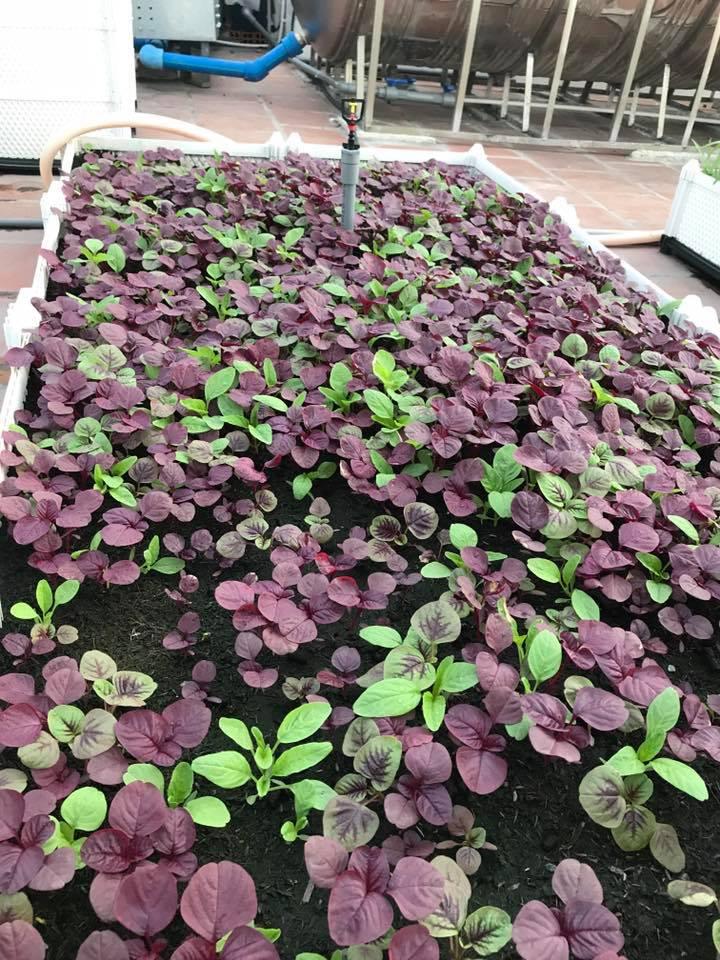 Quang Anh HCM chuyên thi công vườn rau sạch uy tín, chất lượng