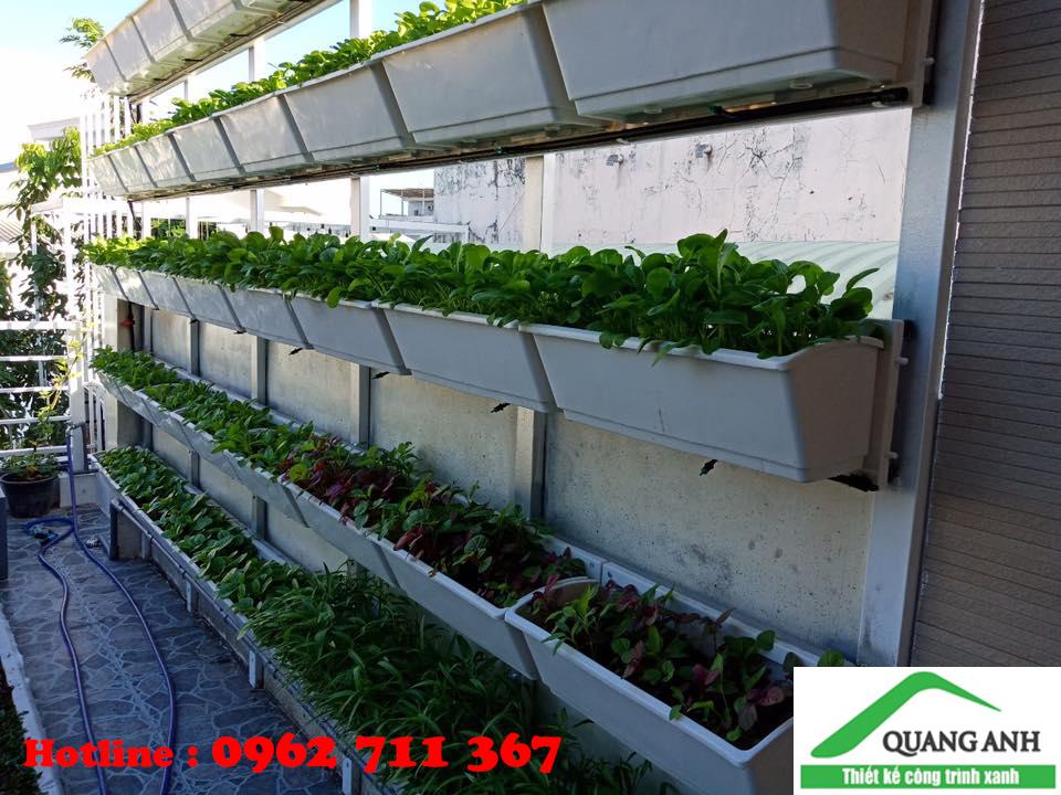 thiết kế vườn rau sạch nhà phố