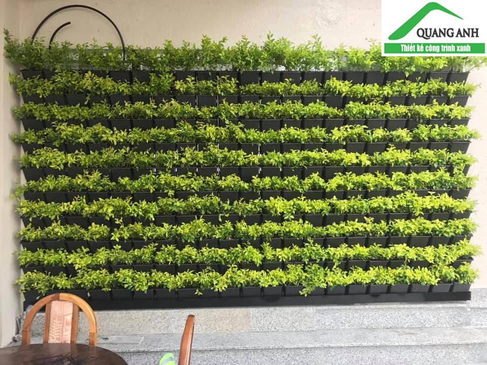 vườn tường xanh