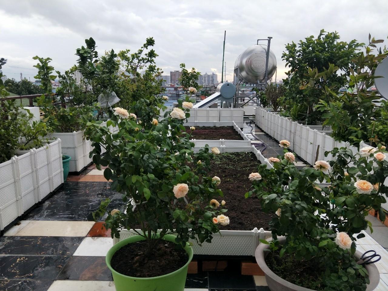 5 mẫu thiết kế vườn rau sạch tại nhà