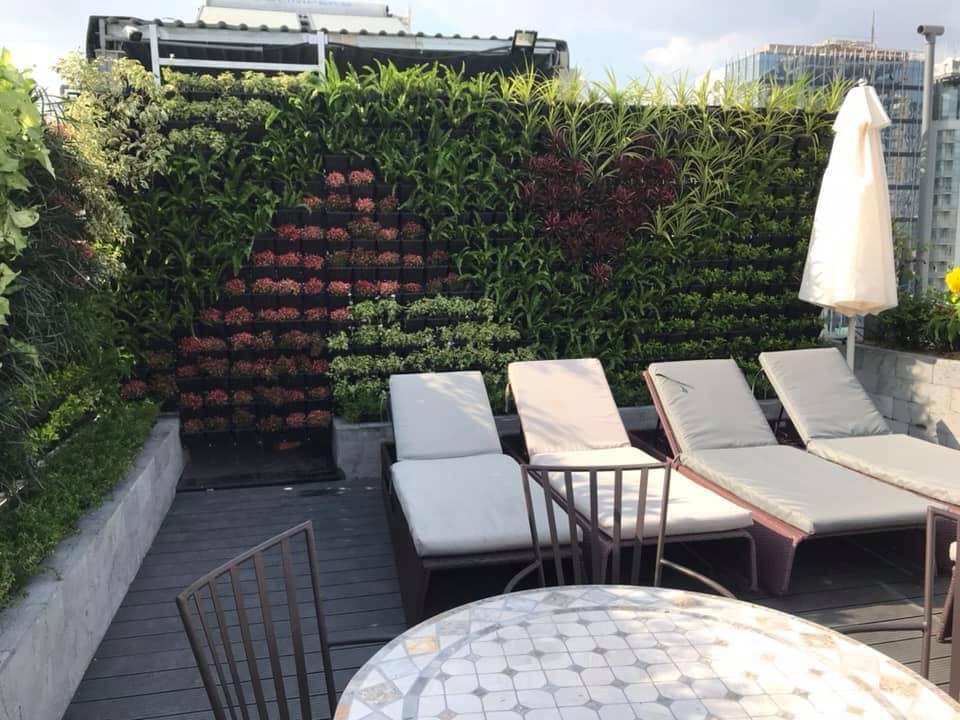 Vườn tường đứng tạo kiến trúc độc đáo cho ngôi nhà của bạn