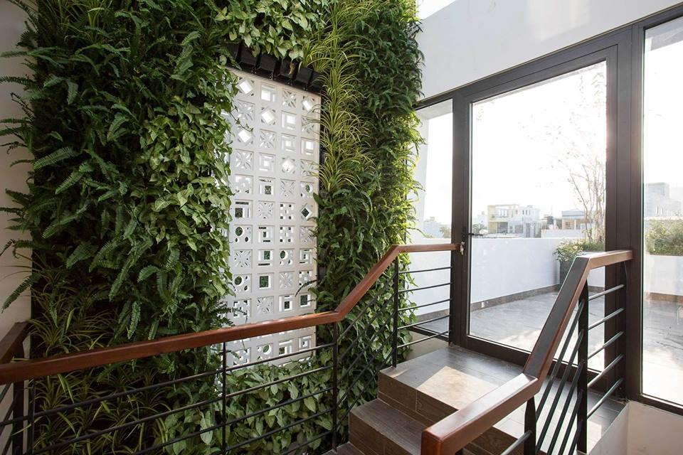 Cách chăm sóc cho vườn tường xanh