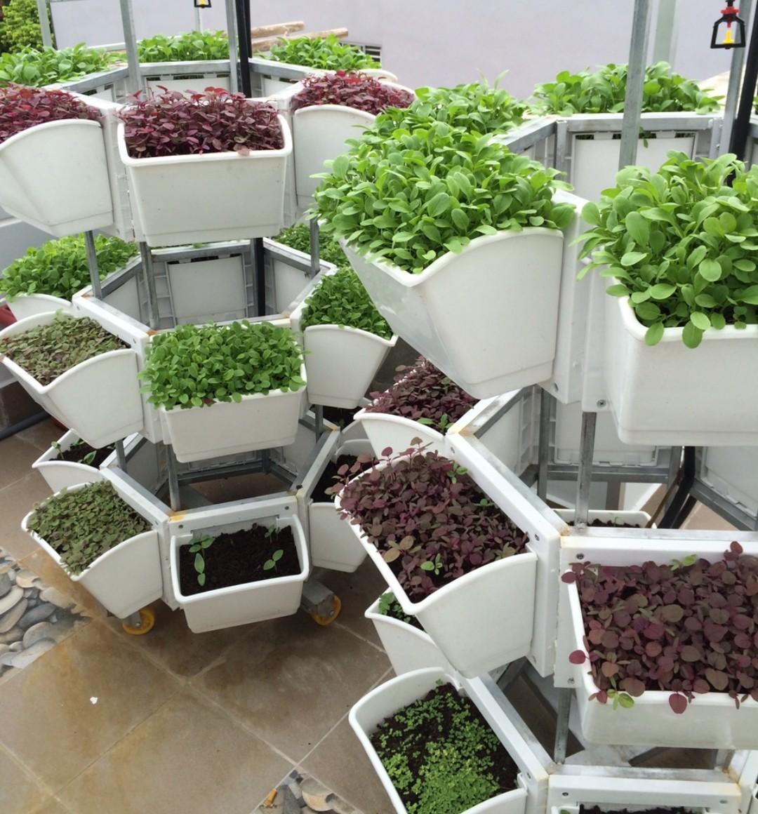 vườn rau sạch trên sân thượng