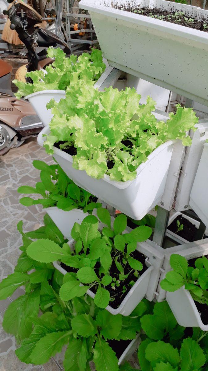 bán giàn trồng rau thông minh