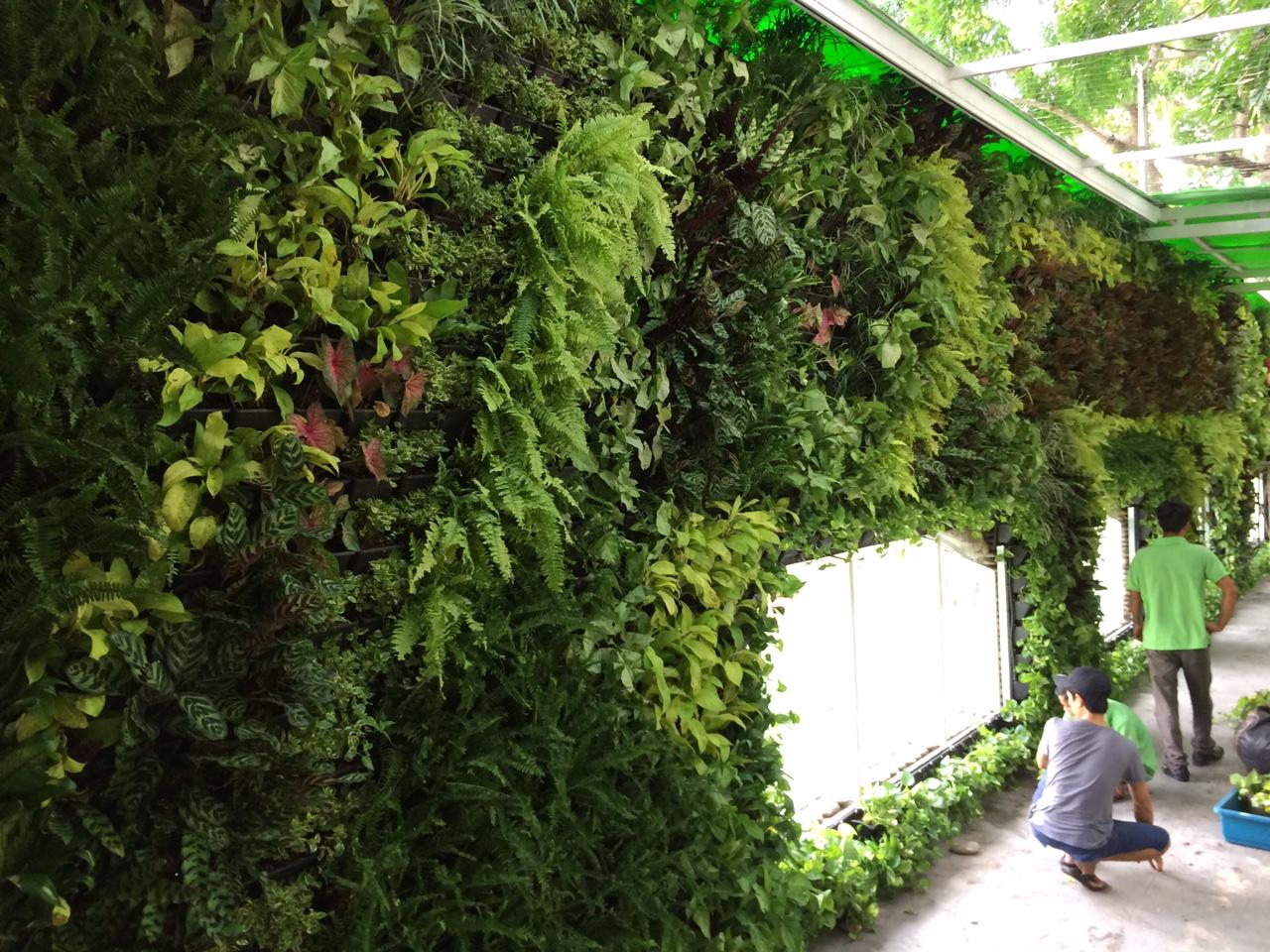vườn tường xanh tạo nên không gian xanh