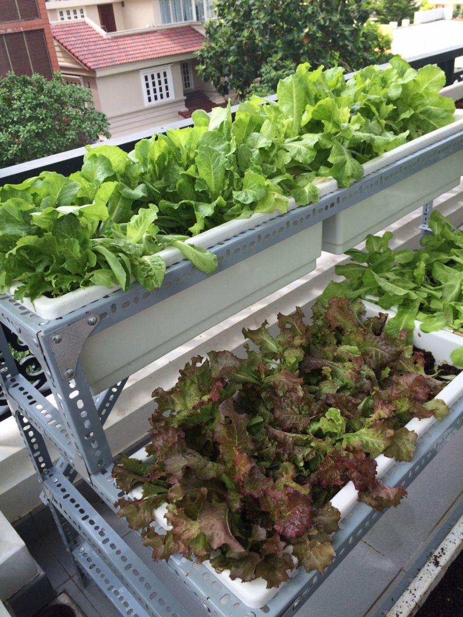 giàn kệ trồng rau sạch