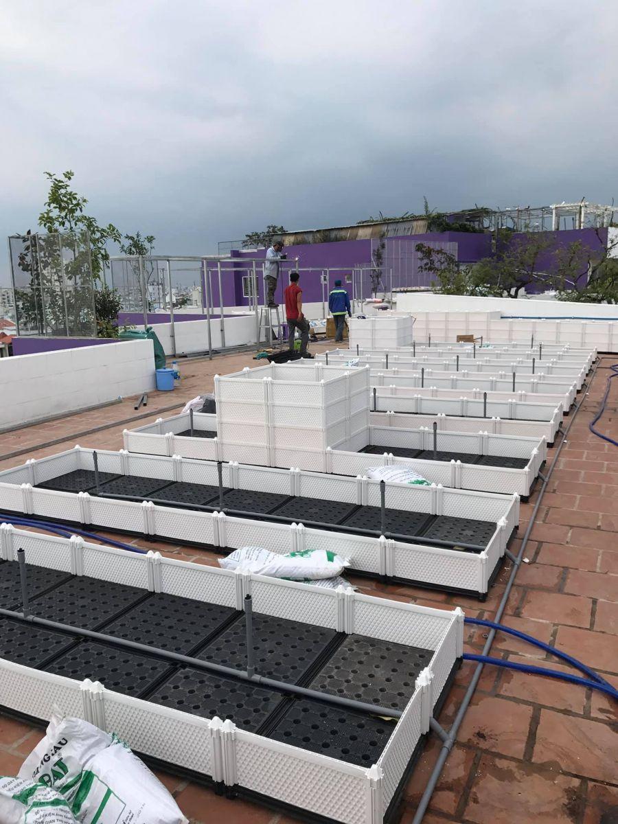 Công ty Quang Anh TPHCM chuyên thi công vườn rau sạch tại nhà