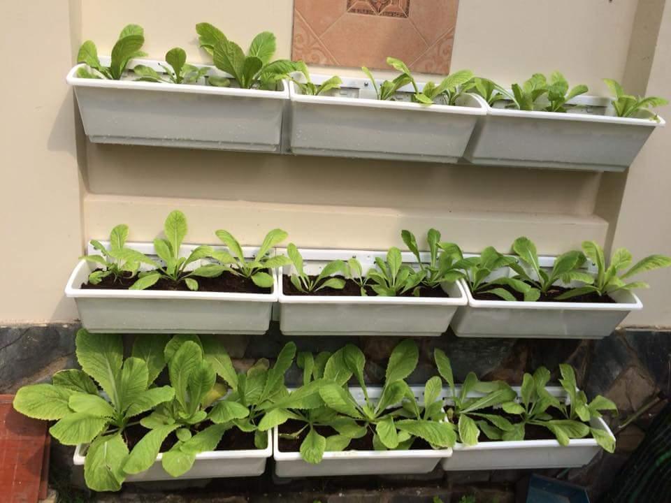 modul trồng rau tường đứng