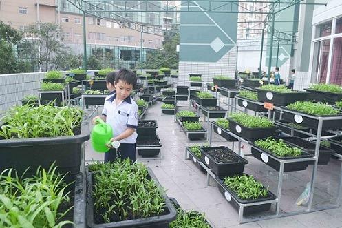 Cho con trồng rau thay vì cho con sử dụng điện thoại vào mùa hè - công ty Quang Anh HCM có đầy đủ vật dụng trồng rau tại nhà