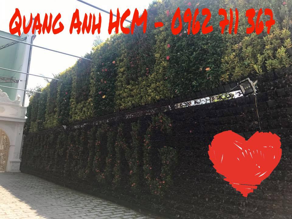 vườn tường cây xanh