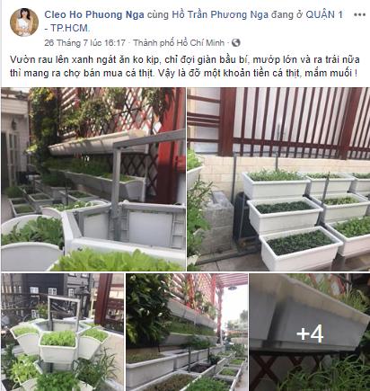 thiết kế vườn rau sạch tphcm