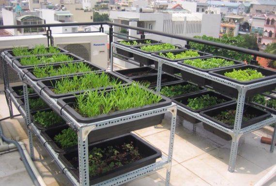 Quang Anh HCM nhận làm giàn trồng rau bằng sắt V lỗ theo yêu cầu khách hàng