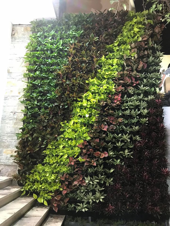 Trang trí vườn tường đứng Shynh Beauty