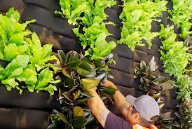 Hiện nay có rất nhiều dịch vụ bảo trì modul vườn tường đứng như Quang Anh HCM