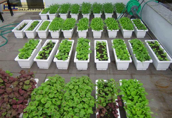 Chậu trồng rau Quang Anh HCM giá rẻ, chất lượng và uy tín
