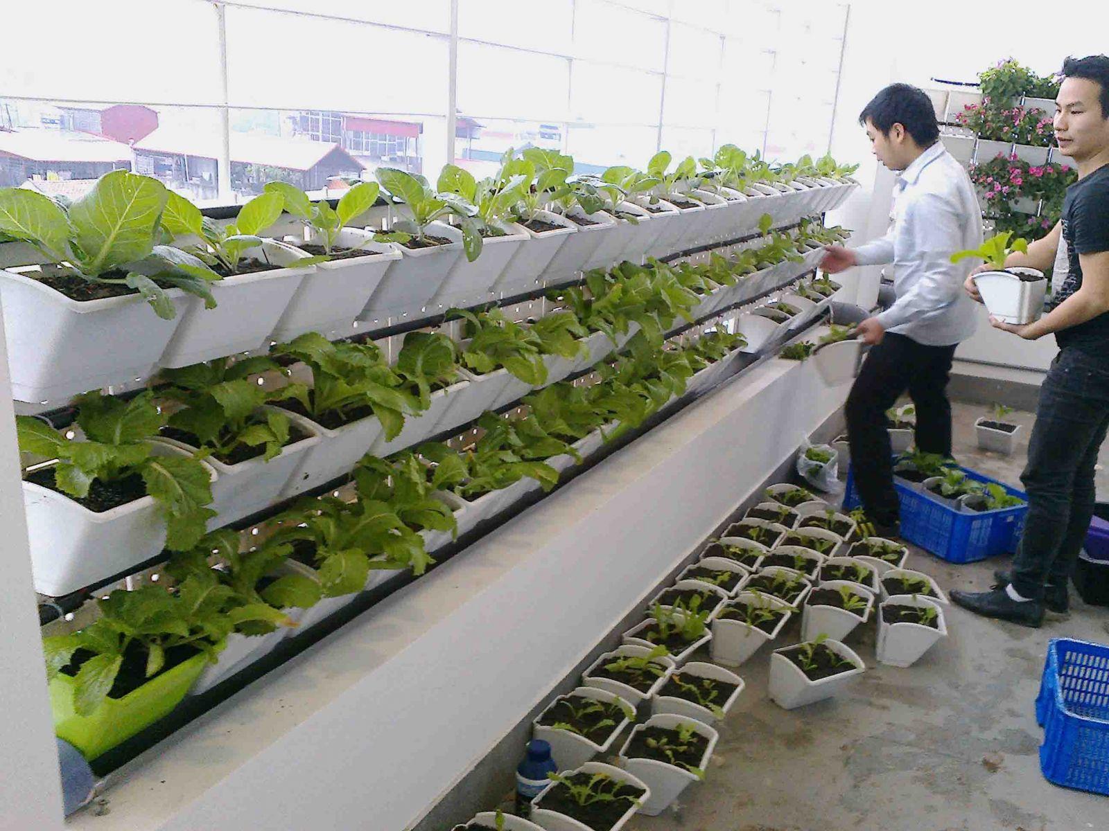 Trồng rau trên sân thượng với modul vườn tường đứng QA03 - QA04 Quang Anh HCM