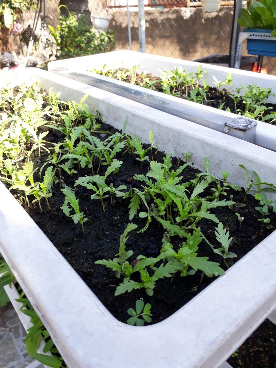 chậu nhựa trồng rau tại tphcm