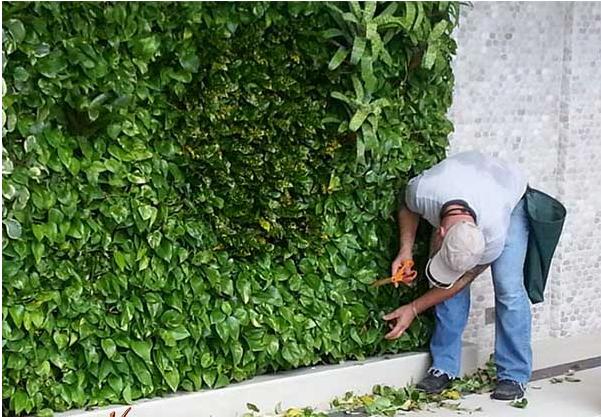 Chăm sóc cây hàng ngày hoặc gọi cho dịch vụ chăm sóc cây định kỳ của Quang Anh HCM.