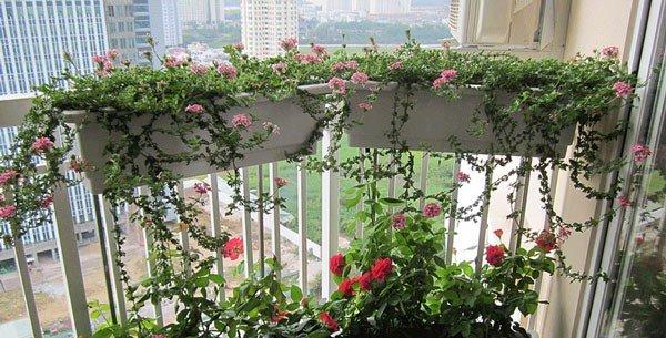chậu trồng rau QA65 rất được ưa chuộng trong trồng rau và trồng hoa.