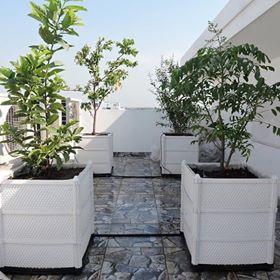 Một số mô hình vườn rau vườn cây bằng chậu ghép Quang Anh HCM