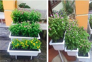 kệ trồng rau thông minh Quang Anh