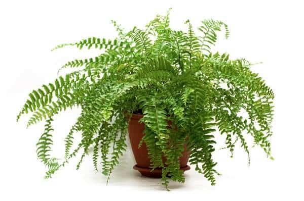 Các loại cây phong thủy nên trồng trên vườn tường đứng