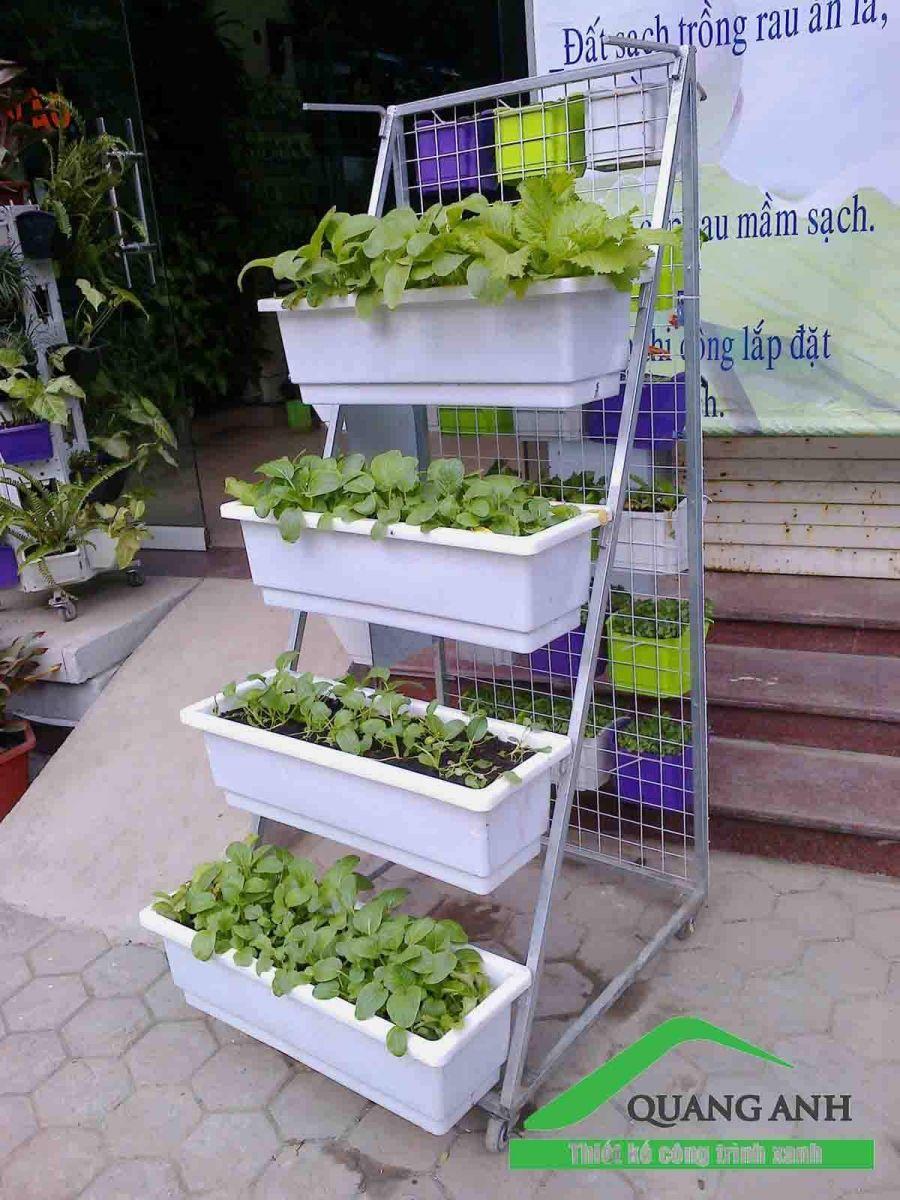 vườn rau sạch với giàn trồng rau